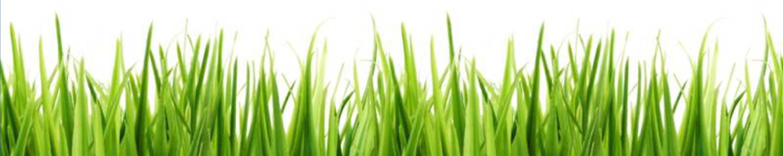 Grass_Border_4.jpg